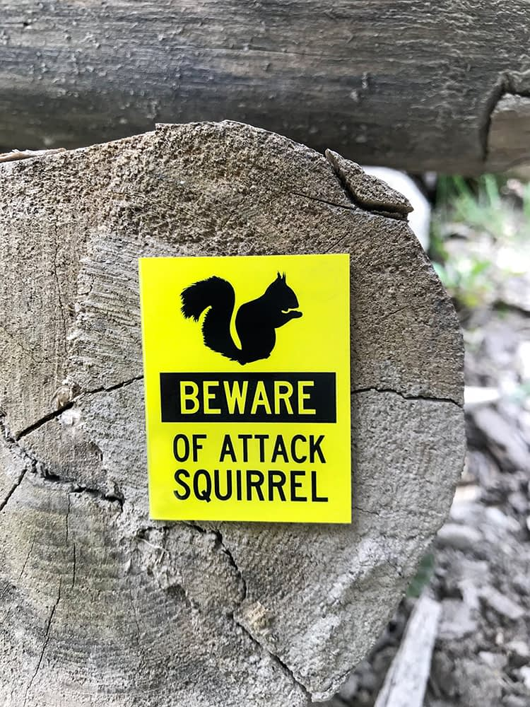 Beware of Attack Squirrel