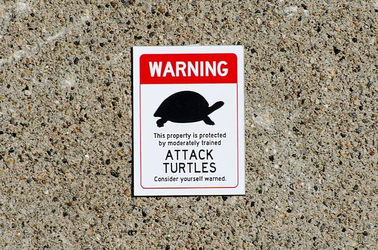 Warning – This property is protected by moderately trained Attack Turtles. Consider yourself warned.