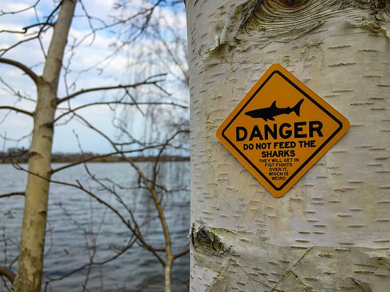 Danger – Do Not Feed the Sharks. They Will Get in Fist Fights Over It, Which is Weird.